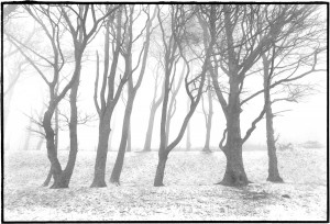 Blog_The South Downs Way.Chanctonbury Ring, East Sussex.December 1995.