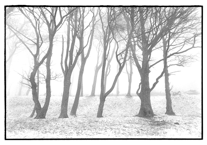 The South Downs Way.Chanctonbury Ring, East Sussex.December 1995.