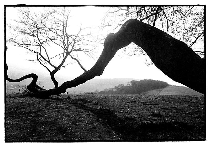 Chanctonbury Ring, Sussex, England by Toby Deveson. April 1997