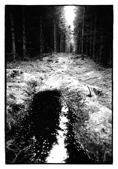 Clocaenog Forest.North Wales.April 1999.