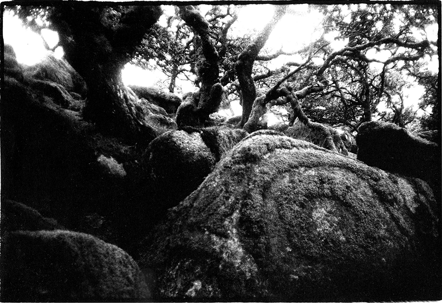 Wistman's Wood, Dartmoor, England by Toby Deveson. Part of the West of the Sun series.June 2015